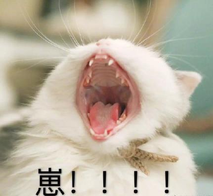 崽啊表情包(开启动物世界喊人模式) 无水印版图片