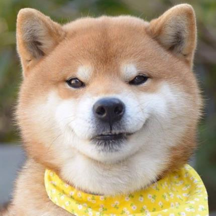 日本柴犬Ryuji笔画图片a笔画简的表情图片