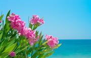粉红色鲜花植物与海景摄影高清图片