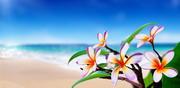 生长在海边的花卉植物摄影高清图片