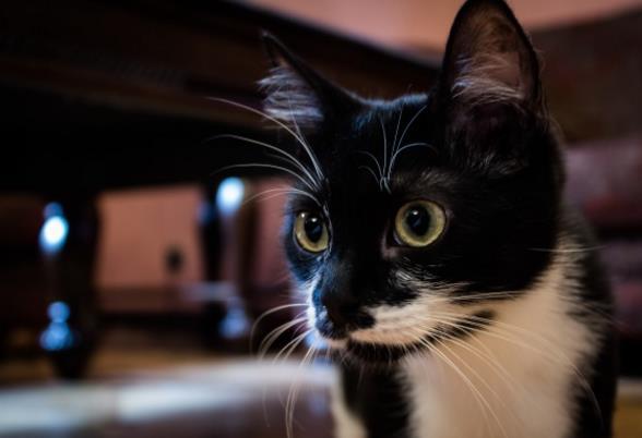 可爱黑色猫咪高清素材下载
