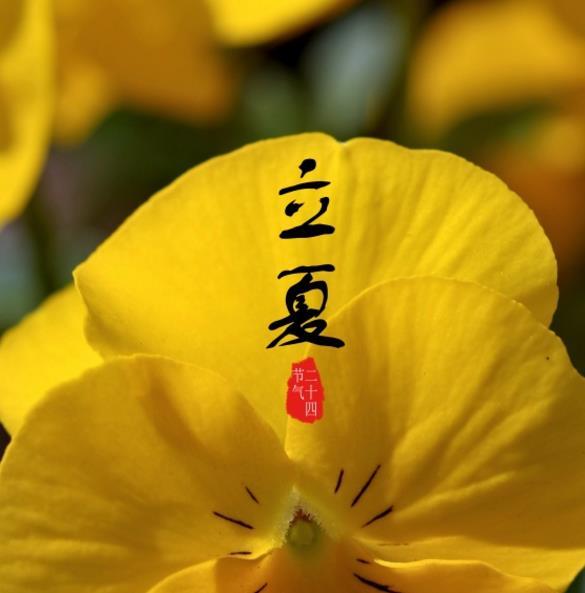 传统的24节气你了解多少呢?你需要节气的素材吗?立夏节气设计高清图片中主要以黄色为主题,黄色的花朵显得画面感特别漂亮,花朵的花瓣也是那么的大,更突出了立夏这个节气的重要性,立夏代表着夏天的到来,美好的夏季就从此时开始了,你喜欢夏天吗?喜欢的话就来欣赏美景吧!