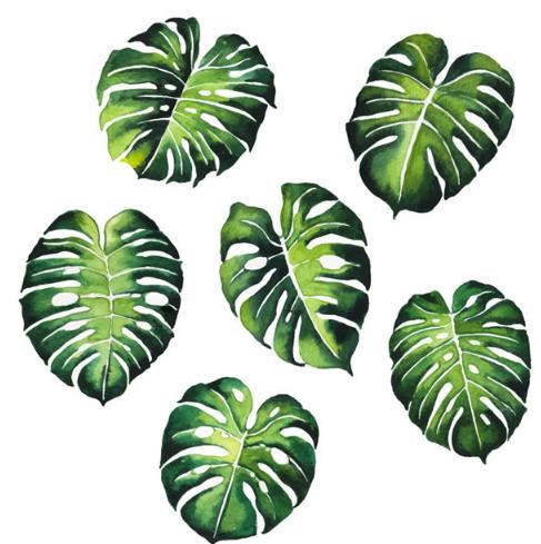 绿色龟背竹叶子设计矢量素材