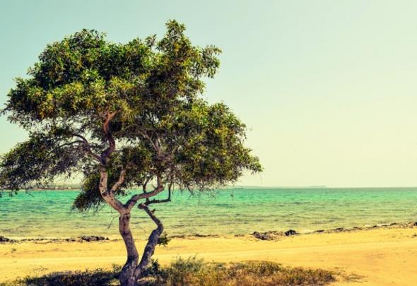 茂盛的树叶笼罩了一片清凉的地方,如果你在海边玩累了,还可以在大树下