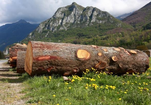 木头木材风景高清图片