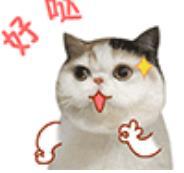 亲亲少女喵表情包(搭配恰到好处的文字描述) gif动态表情图片