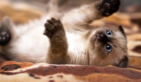 平面素材 精美图片 动物 > 可爱猫咪精美大图下载  你最喜欢什么动物