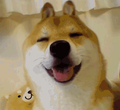 兔耳柴犬宝宝表情包下载(可爱的柴犬宝宝)