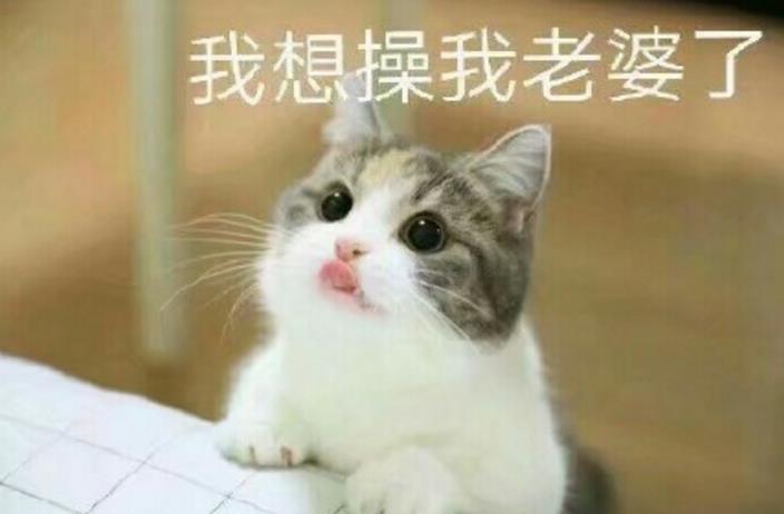 猫妻奴表情包(哄你的老婆开心) 最新高清版图片