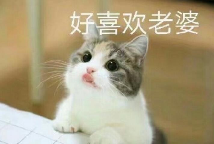 首页 软件下载 联络聊天 qq 表情 > 猫妻奴表情包下载  斗图表情包