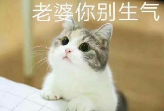 知道怎么哄你的老婆开心吗?哈哈!小编告诉你哦!用猫妻奴表情包绝对会让你事半功倍的哦!这款表情包真的是异常的可爱!在猫妻奴表情包中你可以充分的像你的老婆表达爱意!当然可能也会有一些色色的话哦!萌哒萌哒的小猫正在向你袭来!准备好了吗?