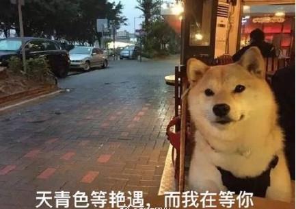 柴犬单身狗表情包(90后真的是无言以对) 正式版
