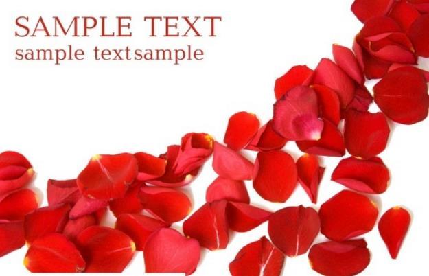 520玫瑰花瓣psd分層素材下載 - 數碼資源網