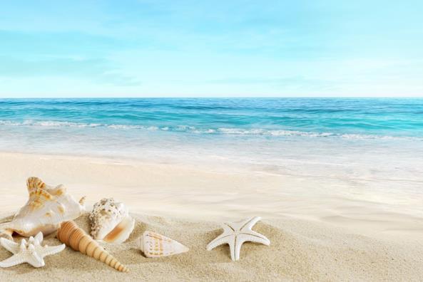 海滩好看贝壳图片,海滩贝壳,海边贝壳唯美图片_大山谷图库