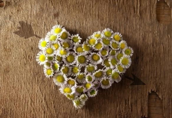 你想拥有一个独特的背景吗?那就来数码资源吧!心形雏菊木纹背景高清图片中采用幼小的菊花作为心形摆放在具有古代的木纹背景上,融合了古代和现代风格的结合,形成了独特的背景图画,漂亮的黄色菊花堆成心的形状,特别的吸引人,你心动了吗?心动不如行动哦!
