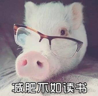 小猪猪减肥表情包下载(减肥太难减了) 无水印版图片