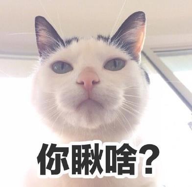 首页 软件下载 联络聊天 qq 表情 > 你瞅啥猫咪表情包下载  斗图表情