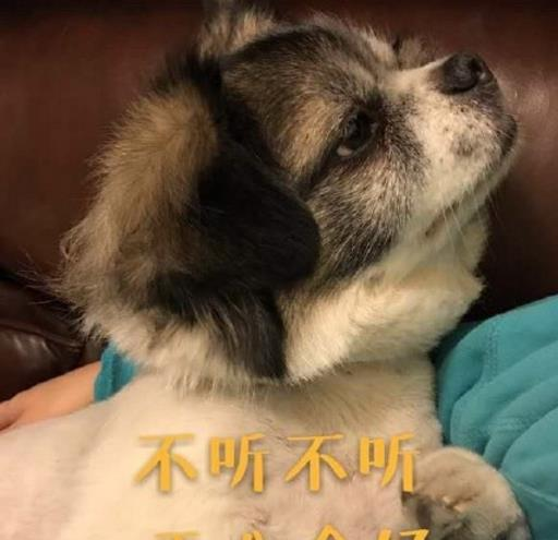 累成了狗表情包(接地气的表情系列图) 正式版