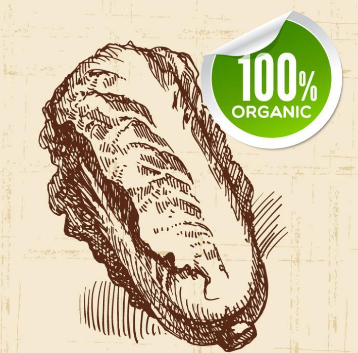 手绘有机白菜设计AI素材