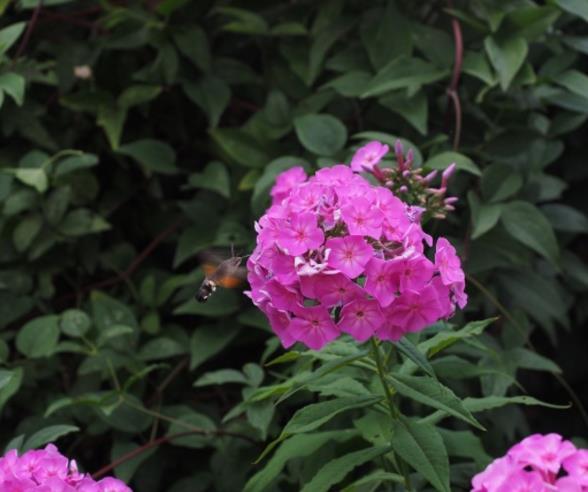 好看的粉色花朵精美图片