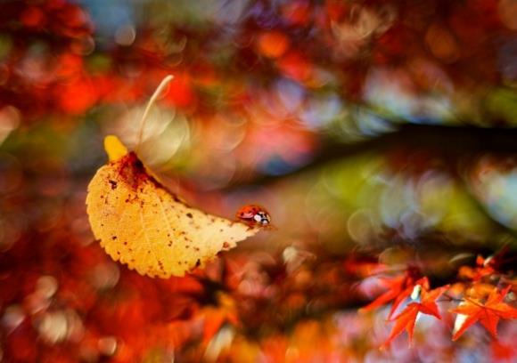 秋天落叶的场景有点凄凉的感觉,你喜欢有关秋天落叶的图片作为壁纸吗?苍凉的秋天落叶桌面壁纸高清图片背景是朦胧的风格,朦胧的感觉给人一种无限的遐想空间,图中还有一片树叶呈现在那里,似乎显得忧伤的感觉,在树叶上还有昆虫在爬行着,黄色的树叶正好满足了秋天的衬托,具体内容在缩略图中,快来获取吧!