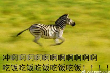 首页 软件下载 联络聊天 qq 表情 > 动物吃货表情包下载  一组为吃货