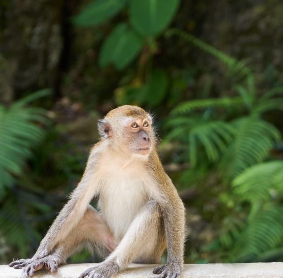 大家都知道猴子是最调皮的,在动物园的时候是不是就喜欢看猴子啊!可爱的猕猴精美大图描述了一只猴子安静的坐在那里,背后的植物绿油油的,可爱呆萌的猴子在看着一边,非常舒服的坐在一边,毛茸茸的身体给人一种平易近人的感觉,忍不住想要抱抱它,你有没有这样的感觉呢!