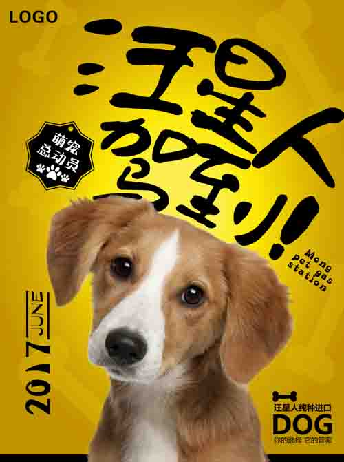 英语动物海报七年级下