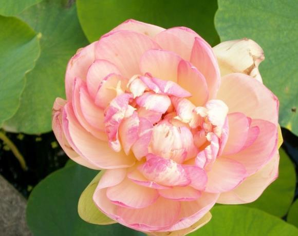 浅粉色花朵精美图片