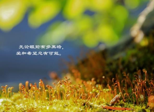 清新文字短句高清图片采用虚幻的色彩背景,显示出了爱情的绝望,运用