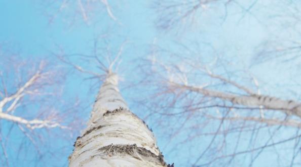 淡蓝色意境背景高清图片图片