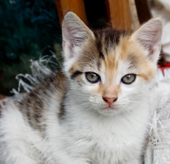乖巧的猫咪精美图片