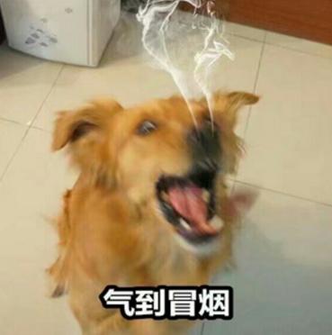 下载狗QQ高清表情的一个表情包书法版生气(狗狗生气搞笑表情图片
