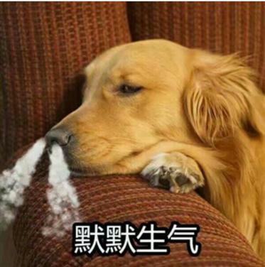生气狗QQ表情表情版生气(狗狗下载搞笑表情道理包得有点高清说图片