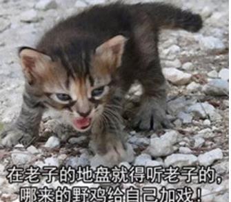 壁纸 动物 猫 猫咪 小猫 桌面 335_293