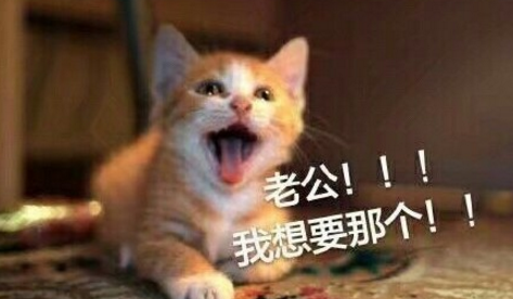 猫咪喊老公qq表情包(老公,我可爱吗) 高清完整版