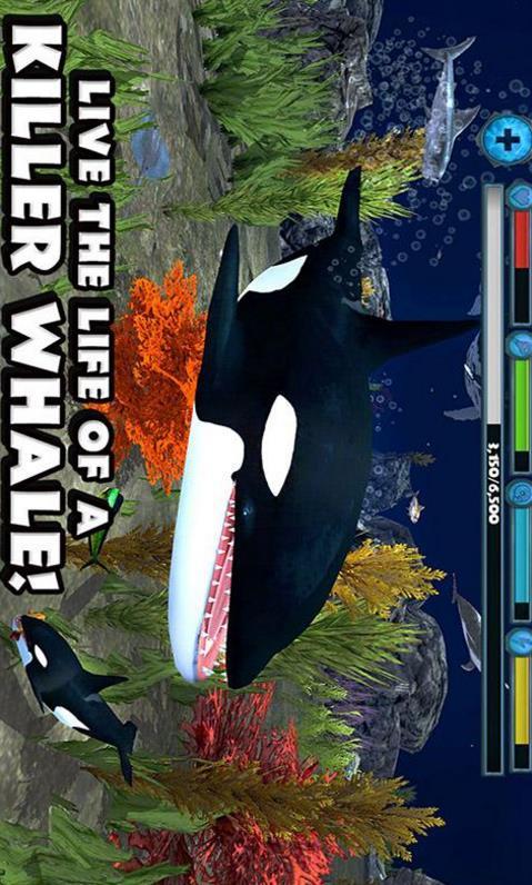 虎鲸模拟3D安卓版介绍