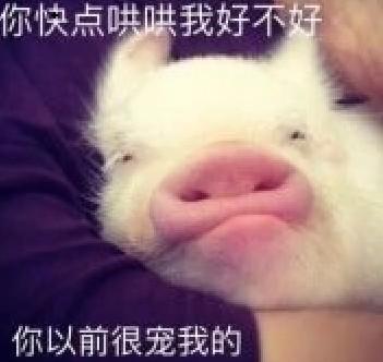笑出猪叫表情下载(笑出猪叫高清彩色无表情水印包哈士奇表情图片
