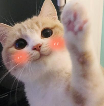 笑起来超可爱,很有感染力,喜欢小动物的人士可以下载微笑喵星人qq表情图片