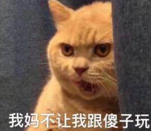 暗中做事橘猫高清版最新版下载(水印无表情委屈搞笑认真的图图片