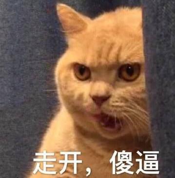 暗中委屈橘猫表情包版最新版下载(高清无水印图片