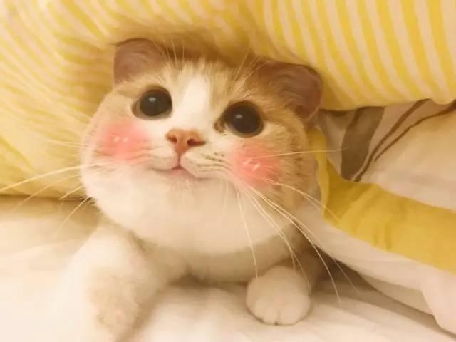 和小伙伴聊天时怎么能够做到,任他花言巧语我自岿然不动呢?这里有一款表情包能够做到这样哦,中华气死猫QQ表情包最新版。这款表情包里面的小猫非常呆萌,简直就是那种能够萌出一脸血的主角,它无辜的小表情,让你和朋友聊天的时候使用,更加气人,中华气死猫QQ表情包最新版是最时候斗图气人的表情包,而且还能够卖萌哦,喜欢斗图的朋友们来使用吧!