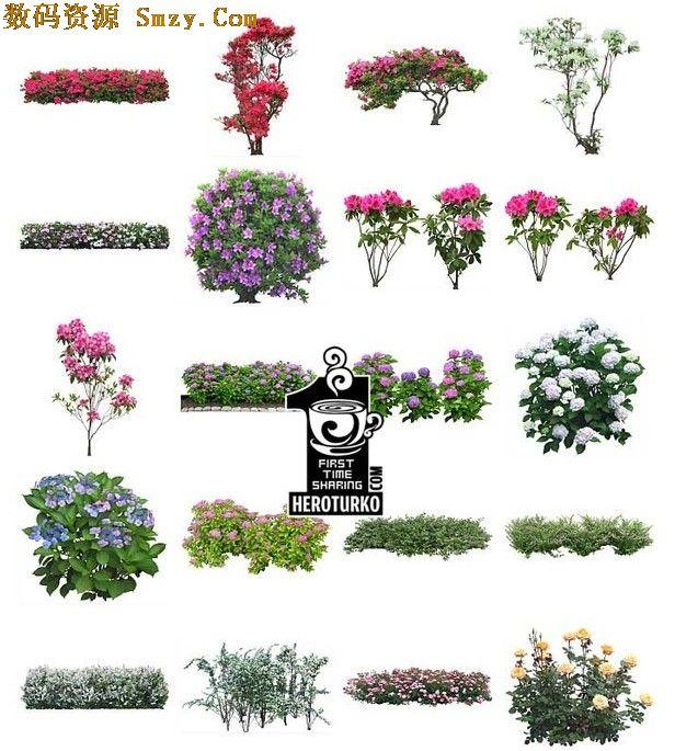 PSD格式高清晰花卉圖下載