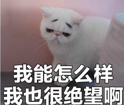 高冷猫咪高清表情包下载|高冷猫咪表情大全下载最新版