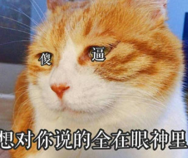而且生无可恋可爱猫咪表情包现在在微信朋友圈非常的受欢迎哦!