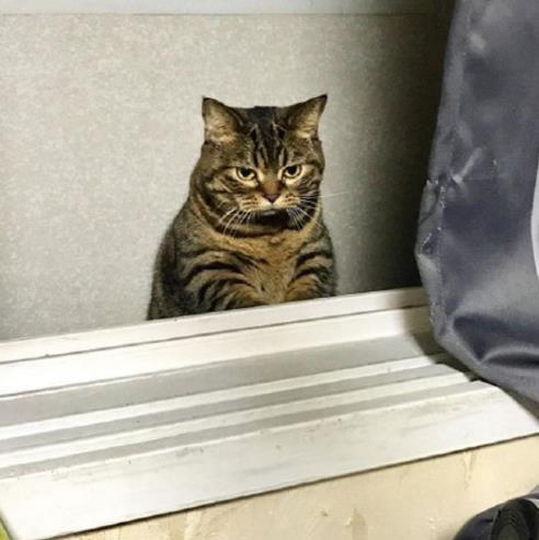 壁纸 动物 猫 猫咪 小猫 桌面 492_493