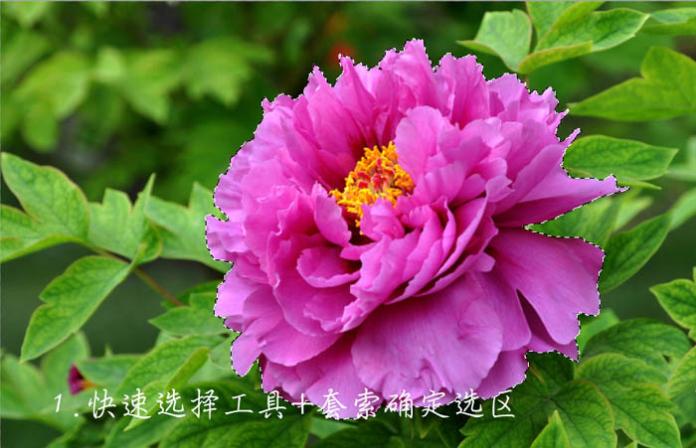 漂亮花朵花瓣飞溅Photoshop合成教程