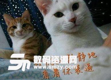 首页 软件下载 联络聊天 qq 表情 > 俄罗斯惊讶猫qq表情包最新版下载