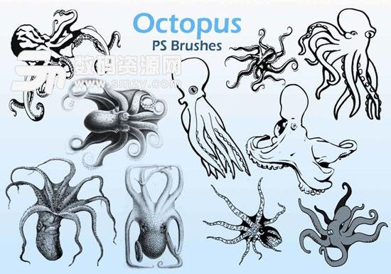 海洋软体动物章鱼笔刷vol.