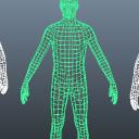 三维人体绿色版